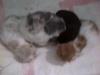 img-20120317-00534